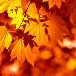 Autumn Leaves from CanStockPhoto.com